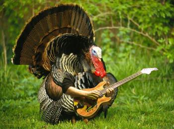 TurkeyRock